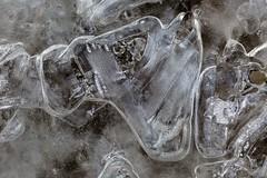 Abraham Lake Bubbles (Edmonton Ken) Tags: ice bubble texture cool cold white clear frost abraham lake alberta famous park travel destination shape