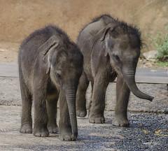 Orphan elephants