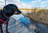 Cortana at Schoolcraft (Tony Webster) Tags: cortana minnesota mississippiriver schoolcraftstatepark autumn dock dog doggy fall remer unitedstates us