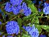 Flora and Fauna! (maginoz1) Tags: abstract art jasmine flora fauna manipulate curves flowers spring october 2017 bulla melbourne victoria australia canon g16 aussiebeetle