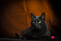 pepe modella (Pepenera) Tags: black cat cats gatto gato