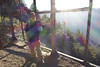 Hike to Big Horn Mine (Danielle_M_Bedics) Tags: bighornmine hike angelesnationalforest nature mine goldmine mountbadenpowell naturephotography hiking trail slope rock scree