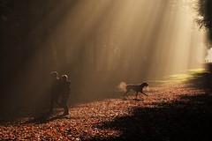 Step into the light (peeteninge) Tags: sunbeams sunrays sunlight forest morning fog dog nature zonnestralen zonlicht bos natuur hond sochtends mist sonyrx10 sony heiloöerbos