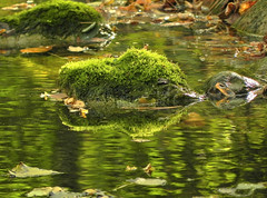 ...the greens... (carbumba) Tags: moss green growth water pond nature wet leaf reflection reflect rock nikon