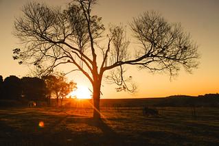 Pôr do Sol na Fazenda.
