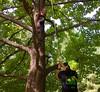 IMG_7631 (Montgomery Parks, MNCPPC) Tags: trees treeclimbing climbing children boy girl boys girls mothers families walllocalpark rockville popupinmontgomeryparks fall autumn october october2017 scaling