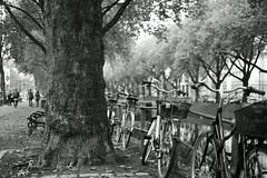bike@Kö, Düsseldorf 3 (Amselchen) Tags: bicycle kö düsseldorf germany season autumn fall canal bokeh blur dof depthoffield fujifilm fujifilmxseries fujinon xt2 fujifilmxt2 xf35mmf14r