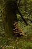_MG_7764 (Cintia Billmaier.) Tags: setas hongos liquenes ucieda naturaleza verde color pilze mushroom arboles baum bäumen natur nature cantabria kantabrien paisaje reservanatural cantabriainfinita