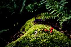 Höst \ Autumn (lmbythesea) Tags: fotosondag fs171015 hostfoto