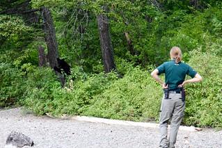 Canada Park Ranger watches the black bear