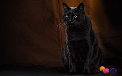 pepe (Pepenera) Tags: cat chat gatto gato hisc c excellent photography
