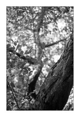 (floguill) Tags: leica iiig canon serenar 5018 kentmere 100iso lc29