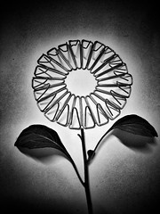 - iron flowers - (i'm not romantic)  #papreclips #flowers #fineart #fineartphotography #stilllife #stilllifephotography #blackandwhite #blackandwhitephotography #blackandwhitephoto #bw #bnw #monochrome #monochromephotography #iphone #other (victor_erdi) Tags: papreclips flowers fineart fineartphotography stilllife stilllifephotography blackandwhite blackandwhitephotography blackandwhitephoto bw bnw monochrome monochromephotography iphone other freestyle