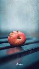 Autumn apple (mirri_inc) Tags: apple red blue bench fog mist gloomy mood autumn nature outdoors tones nikon sigma closeup