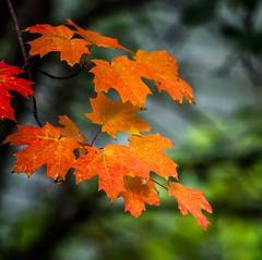 Change of Seasons (Portraying Life, LLC) Tags: michigan unitedstates