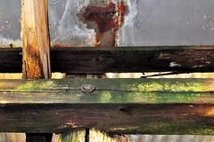 chaos theory (holly hop) Tags: bealiba bealibard centralvictoria victoria australia abandoned empty derelict decay ruraldecay ruins walls mould rot green post rust
