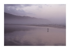 Untitled 364 (Takako Kitamura) Tags: oregoncoast oregon beach ocean dawn seagull