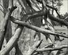 2017-09-20 Acros in DDX 10 min006-02web (Yuriy Sanin) Tags: kievrus kiev blackandwhite bw 6x9 yuriysanin wood trees сухие dry деревья дерево чб чернобелаяфотография юрийсанин horsman