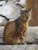 Greek Cat (Toni Kaarttinen) Tags: greece griechenland grecia grèce grécia ελλάδα elláda ἑλλάσ hellás rhodes rodos rhodos rodi rodes rodas ρόδοσ ródos dodecanese island greek rhodescity city holiday vacation summer summerholiday roadtrip rental rentalcar siana cat stairs