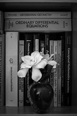 The study of smooth and discontinuous manifolds (hjl) Tags: leaves books manifolds flowers gardenia math vase petals bookshelf