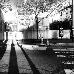 Incidence (LUMEN SCRIPT) Tags: shadow square road monochrome tree blackwhite light silhouette lumenscript squareformat m