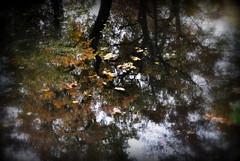 _impressionism (SpitMcGee) Tags: impressionismus impressionism kunstform spiegelung reflection bäume trees blätter leafs herbst autumn brühl schlosspark schlossaugustusburg spitmcgee explore 57