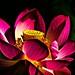 Lotus+flower+4