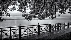 Lakeside Morning... (Ody on the mount) Tags: anlässe bodensee em5ii fototour friedrichshafen omd olympus schiffe see wasser bw monochrome sw badenwürttemberg deutschland de