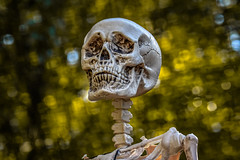 Skeleton & Bokeh (Aliparis) Tags: halloween skeleton 2017 bokeh bones naturallight nikon nikond500 80400mmlens