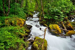 Creek Flowing Through the Woods of the Mount Baker-Snoqualmie National Forest (thor_mark ) Tags: azimuth330 boulders canvas capturenx2edited cascaderiverroad colorefexpro creek day8 landscape largerocksinstream lichenontrees lookingnw monogramcreek mossontrees mountbakersnoqualmienationalforest nature nikond800e northcascadesnationalparkservicecomplex outside overcast portfolio project365 rapids rocksinstream trees triptonorthcascadesandwashington waterflowingdownstream waterfall mountbakersnoqualmienational washington unitedstates
