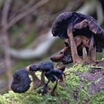 past fungi
