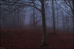 Niebla en el bosque. (antoniocamero21) Tags: paisaje amanecer niebla hayas otoño foto color sony