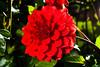 Macro-24695.jpg (CitizenOfSeoul) Tags: flower garten sersheim deutschland macro dahlien germany blumen