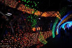 2017 Illumination #3 (Yorkey&Rin) Tags: 11月 2017 autumn em5markii illumination japan kanagawa lawasaki leicadgsummilux25f14 nightview november olympus people rin uc030155 yomiuriland イルミネーション ジュエルミネーション よみうりランド゙ 光の回廊 秋 夜 夜景