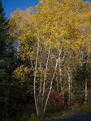 Autumn at the Lake (Keith Levit) Tags: autumn ontario canada hasselbladx1d lakeofthewoods