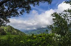 Munnar (Well-Bred Kannan (WBK Photography)) Tags: wbkphotography wbk kannanmuthuraman kannan nikon nikond750 d750 india indian weekendwalk incredibleindia travelphotography travel traveler msb madrasshutterbugs tamronsp1530mmf28divcusd munnar iduki kerala landscape hills teaestate teagarden clouds monsoon sky rain rainyday