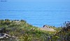 DSC_0178n wb (bwagnerfoto) Tags: landscape landschaft tájkép usa plum island ocean atlantic dunes