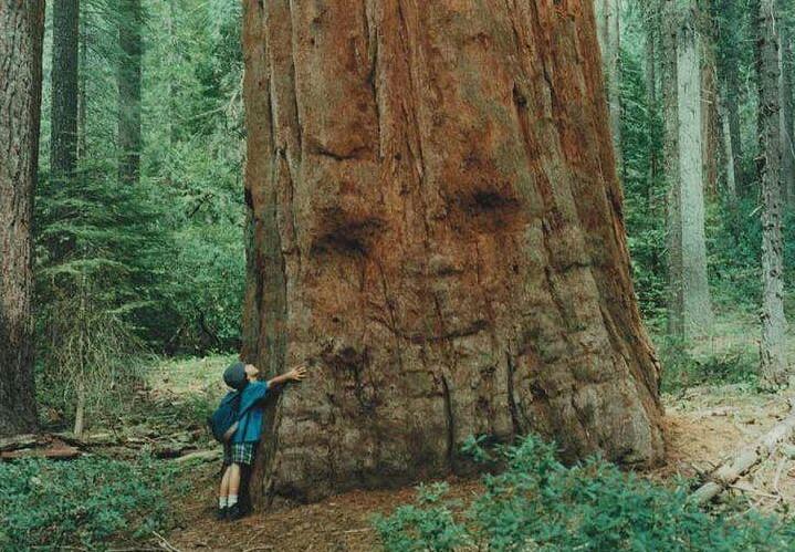 16 gương mặt ma quái tình cờ mọc trên những thân cây vô tri, vô giác - Ảnh 13.