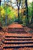Аutumn fairy tale (mmalinov116) Tags: autumn bulgaria българия есен beautiful beauty forest tree