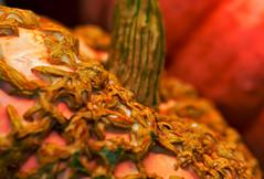 Macro Monday~ Halloween (Karen McQuilkin) Tags: macromonday hmm pumpkin gourd orange texture