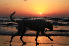 Dog at sunset - Tel-Aviv beach (Lior. L) Tags: dogatsunsettelavivbeach dog sunset telaviv beach