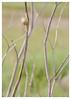 Chercher son chemin... (isabelle.bienfait) Tags: escargot snail dune gastéropode schnecke caracol snegl lumaca slak sneglen
