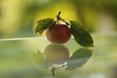 FlickrFriday#Dogme95 (Inka56) Tags: flickrfriday dogme95 apple reflection bokeh glass leaf