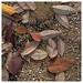 automne feuilles et perles de pluie .