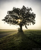 Foggy Sunrise Tree (Jason C Arthur) Tags: bethelchurchroad eastcoventrytownship fog sunrise foggysunrise lonesometree tree silhouette colorphoto contrast photo color photography vignette detail lightandshadow