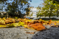 Autumn Leaf (Charliebubbles) Tags: olympusomdem10markiii olympus1442mm crewe memorialsquare photoshopcc abstract closeup 2017