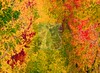 Modern Art (terrywalshimages) Tags: yellow trees leaves fall foliage colors seasons abstract background screensavers nature seasonal watercolor orange green red landscape