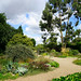 Drought garden at the Beth Chatto Gardens