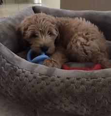 Kizzie's sweet boy Palmer!