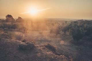 Lever de soleil sur le champ d'olivier